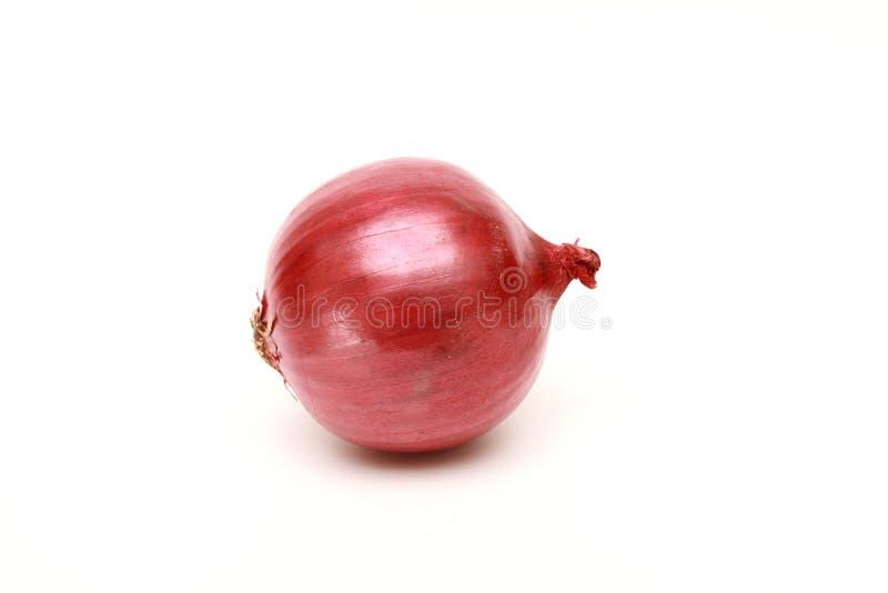 Cebolla roja en el fondo blanco imagen de archivo