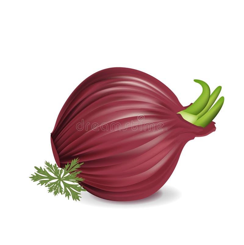 Cebolla roja entera con perejil stock de ilustración