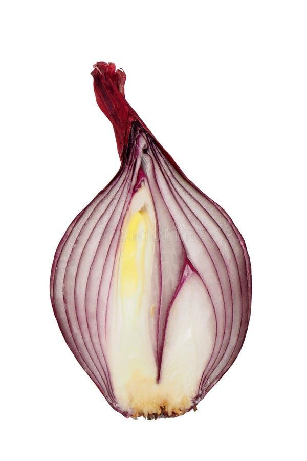 Cebolla roja media imagenes de archivo
