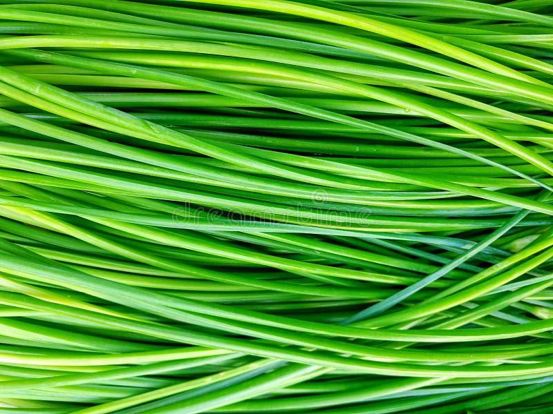 Cebolla verde fotografía de archivo