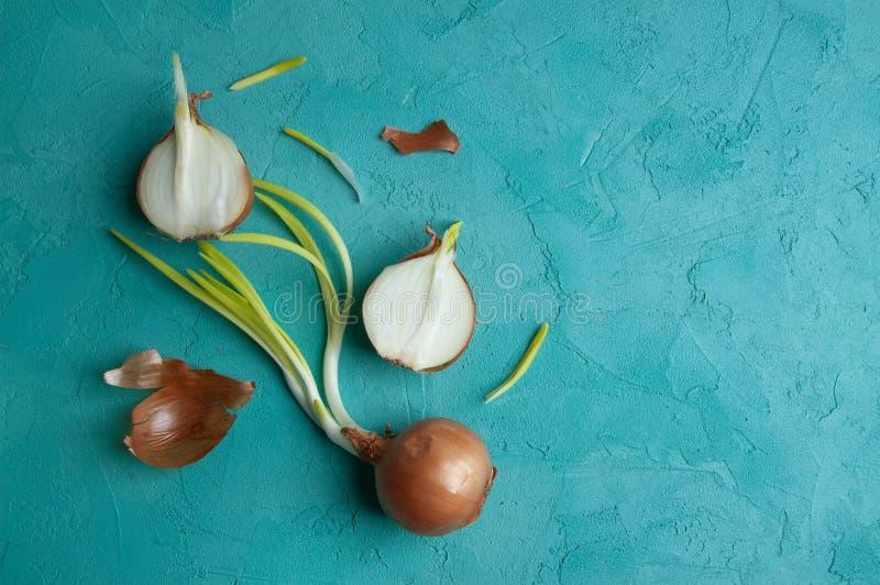 Download Cebollas Brotadas En Fondo De La Turquesa Imagen de archivo - Imagen de cuidado, verde: 100532745