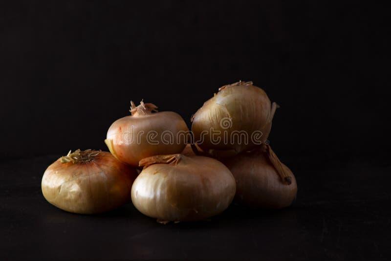 Cebollas italianas de boretano con fondo negro imágenes de archivo libres de regalías
