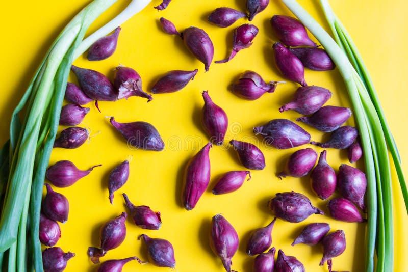 Cebollas púrpuras para plantar con las cebollas verdes en fondo amarillo Visi?n superior fotografía de archivo