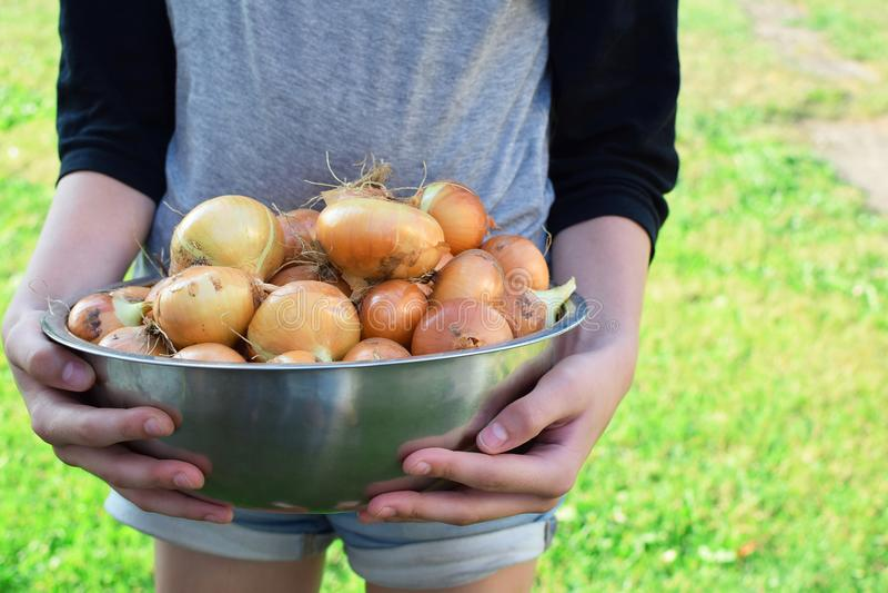 Cebollas que llevan de la muchacha en cuenco fotografía de archivo libre de regalías