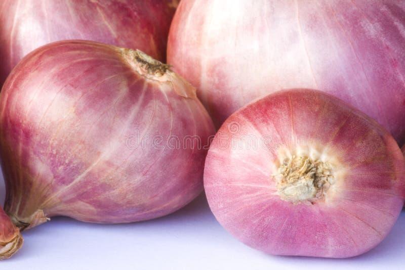 Cebollas rojas frescas fotografía de archivo libre de regalías