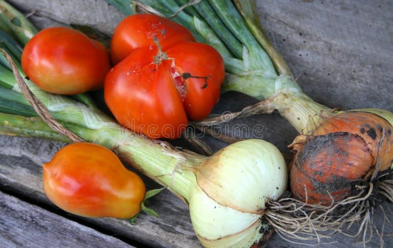 Download Cebollas Y Tomates En El Vector De Madera Imagen de archivo - Imagen de frescura, mercado: 42440751