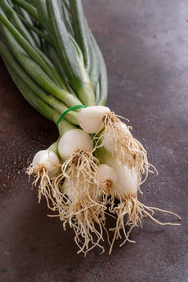 Cebolletas del manojo vegetales con descensos del agua fotos de archivo