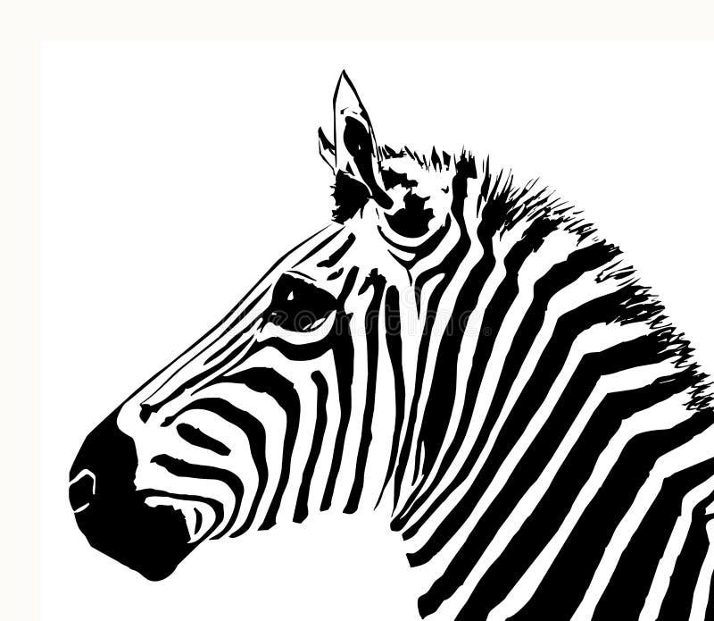 Cebra ilustración del vector