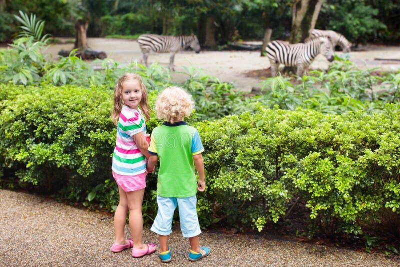 Cebra del reloj de los ni?os en el parque zool?gico Ni?os en el parque del safari fotografía de archivo libre de regalías