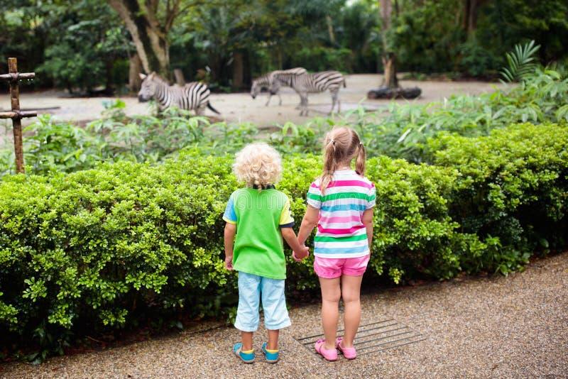Cebra del reloj de los ni?os en el parque zool?gico Ni?os en el parque del safari imagen de archivo libre de regalías