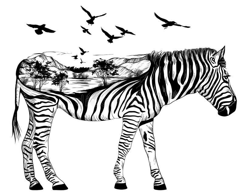 Cebra dibujada mano, concepto de la fauna ilustración del vector