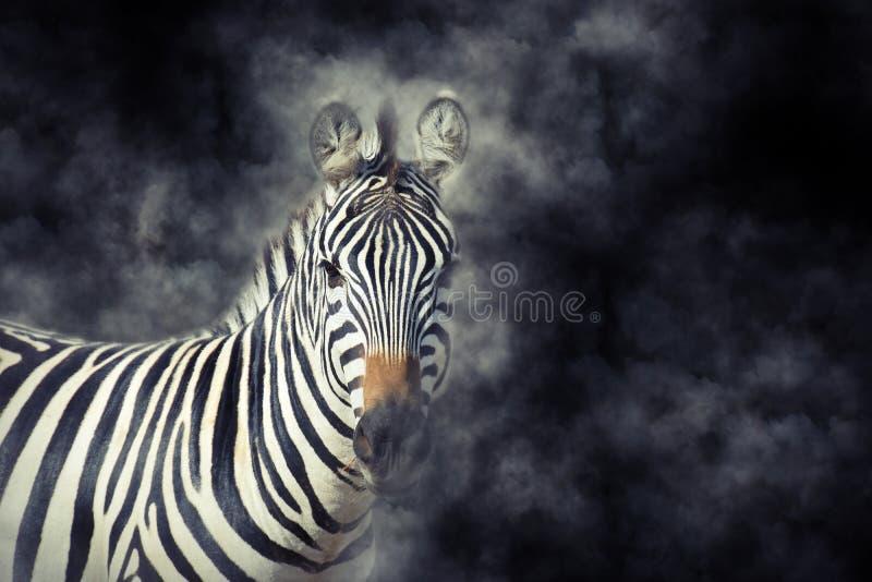 Cebra en humo foto de archivo