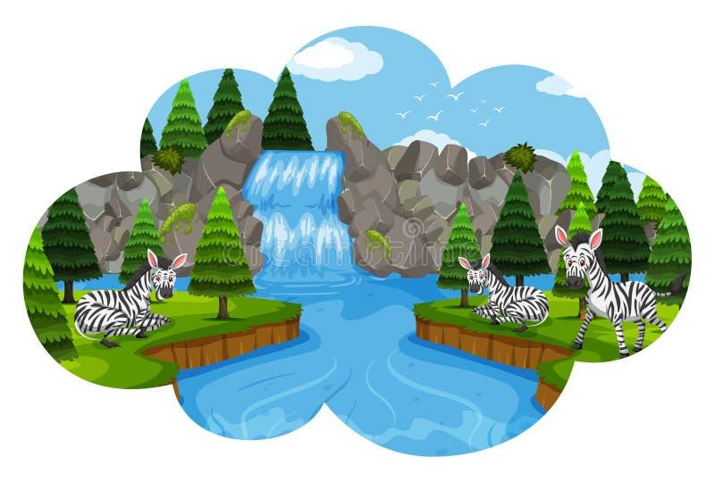 Cebras en escena de la cascada stock de ilustración