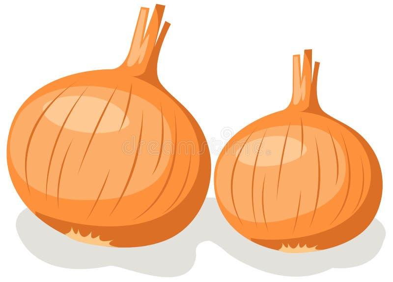 cebula ilustracji