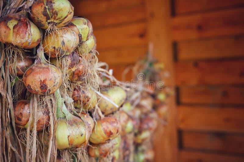 Cebula wiesza na arkanie suszyć w drewnianej stajni zdjęcia royalty free