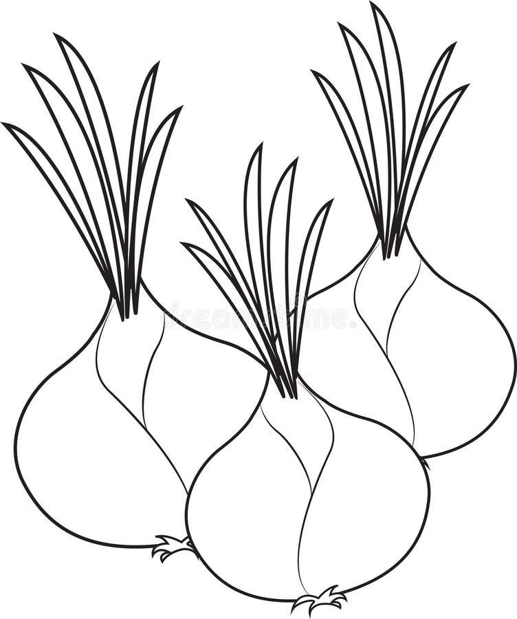cebule ilustracja wektor