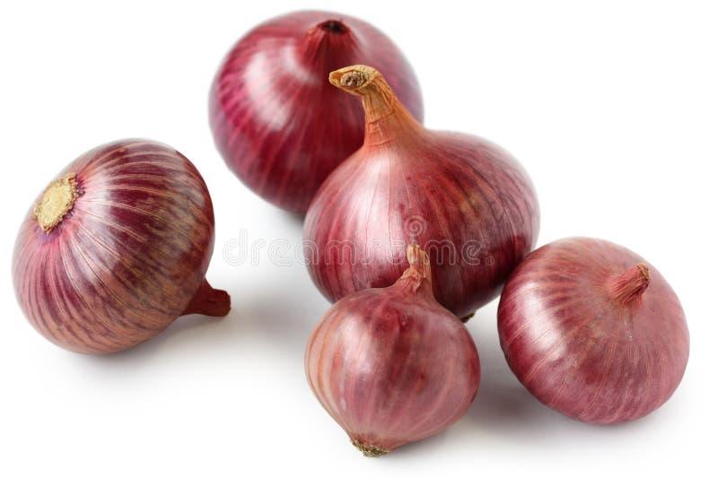 cebule czerwone zdjęcia stock