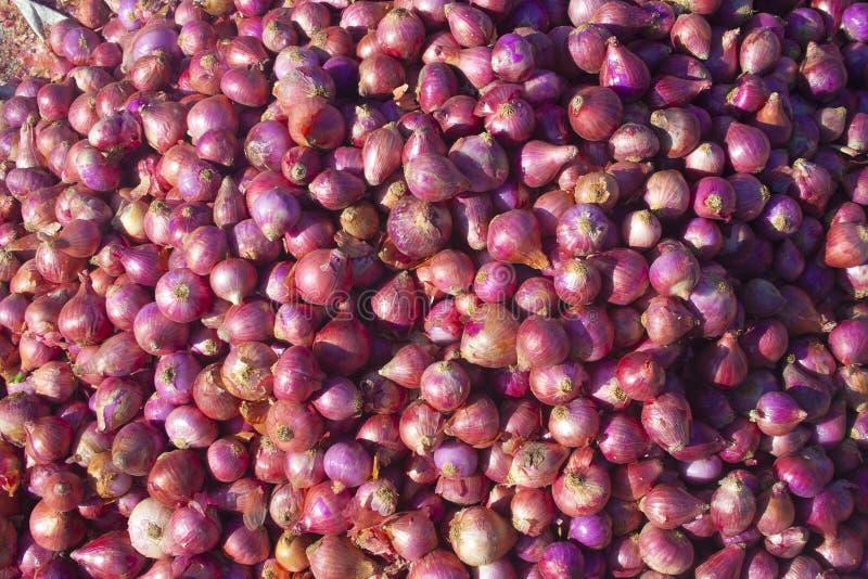 Cebule w Indiańskim wiejskim rynku obraz royalty free