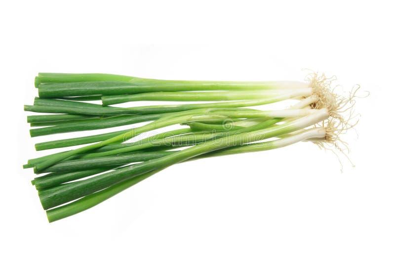 cebuli wiosna obrazy stock