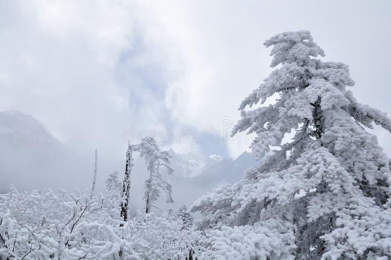Download Cedar stock image. Image of mountain, landscape, pine - 13386373