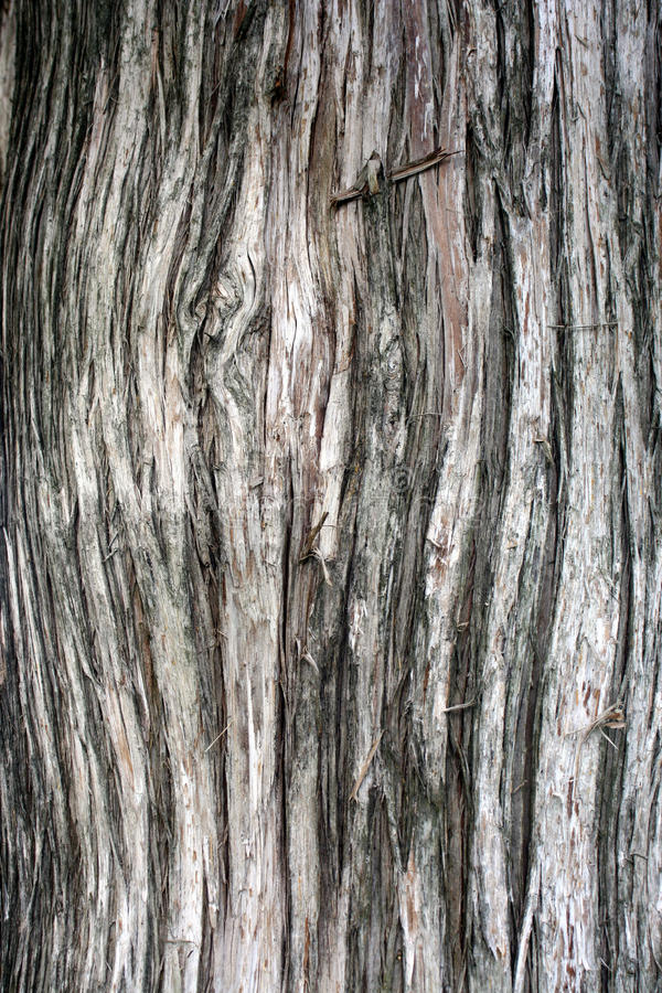 Cedar Bark royalty free stock photo