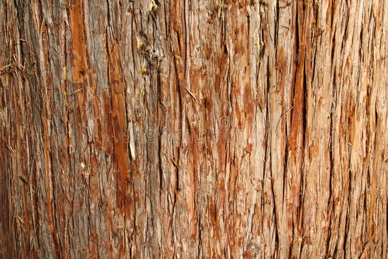 Cedar Bark stock images