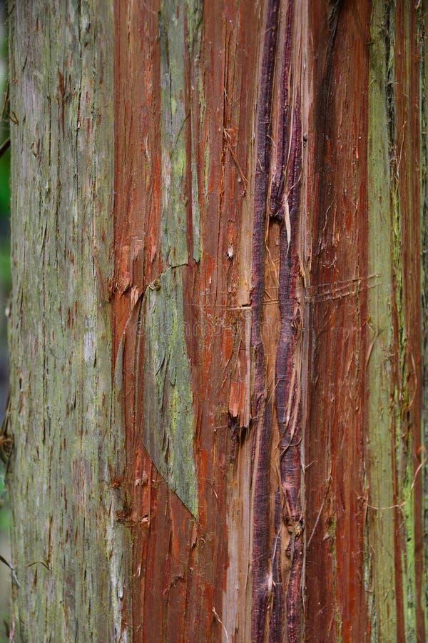 Cedar Bark superficiel par les agents photo libre de droits