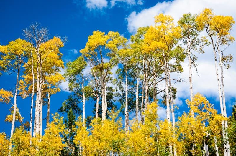 Cedar Breaks National Monument fotografia stock