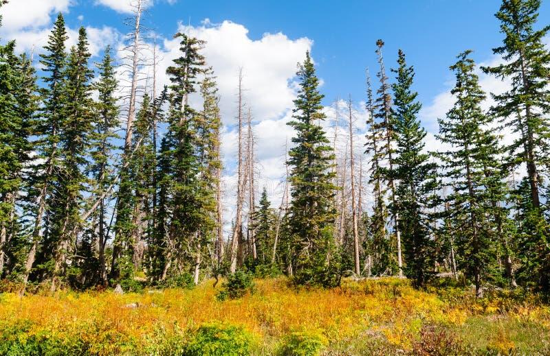 Cedar Breaks National Monument fotografia stock libera da diritti