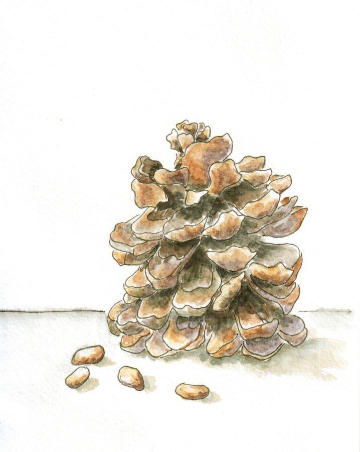 Cedar Cone ilustração stock