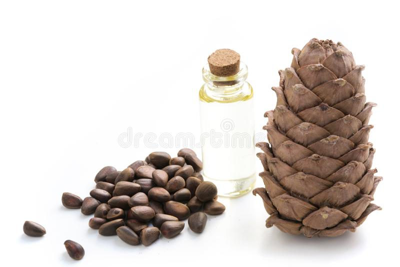 Cedar cone, branches and cedar oil on white background. Close up. royalty free stock photography
