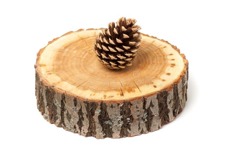 Cedar cone on wood slice, isolated stock photo