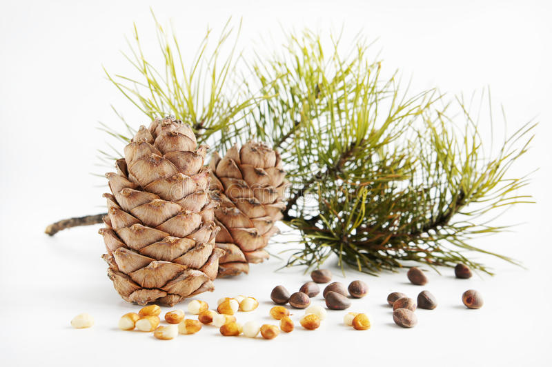 Download Cedar cones and nuts stock image. Image of organic, tree - 22270161