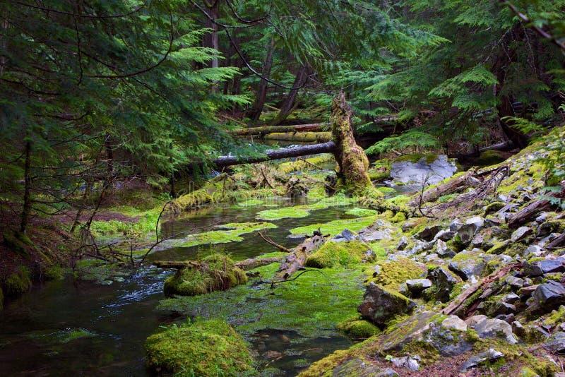 Cedar Creek arkivbilder