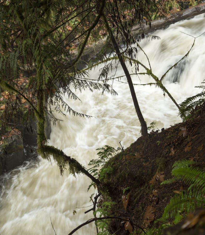 Cedar Creek vicino al vecchio mulino del grano da macinare: Terreno boscoso, Washington immagine stock libera da diritti