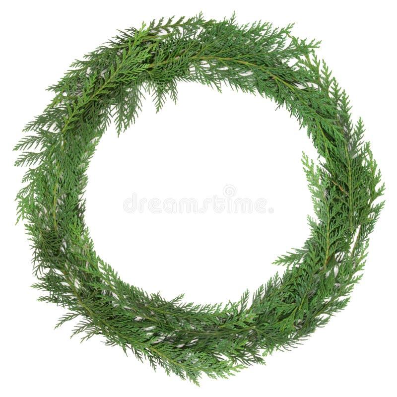 Cedar Cypress Wreath foto de archivo