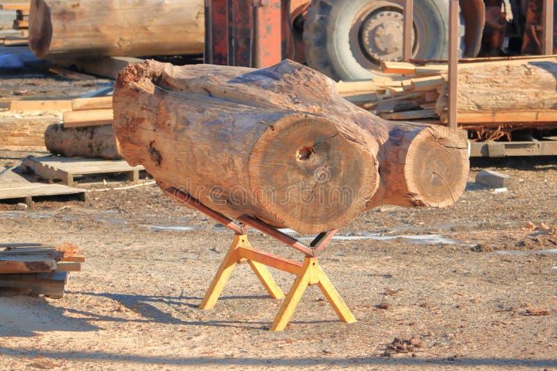 Cedar Deadwood para fabricar imagem de stock
