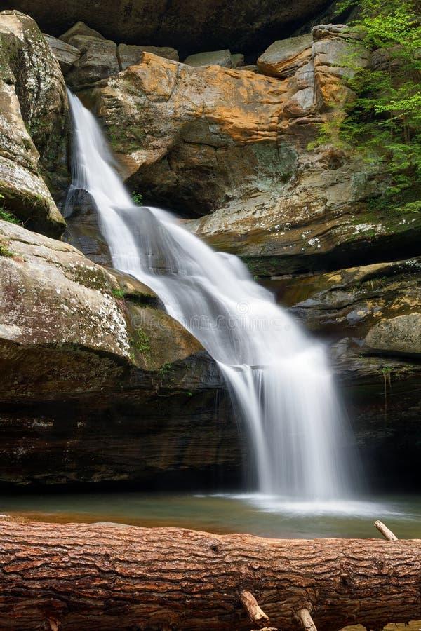 Cedar Falls и упаденное дерево стоковые фотографии rf