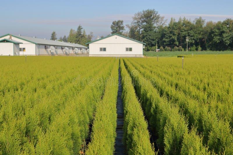 Cedar Hedge Commercial Nursery immagine stock libera da diritti