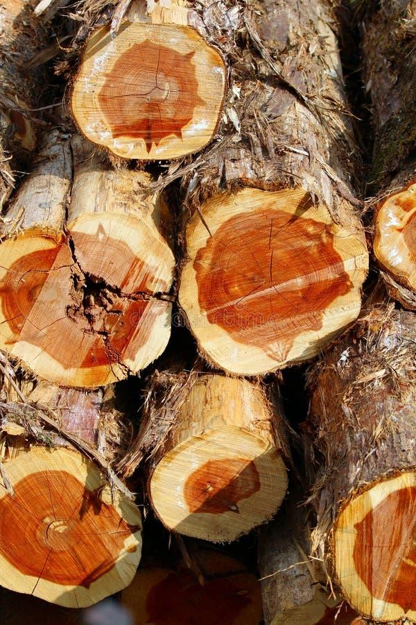 Cedar Logs fotografia de stock