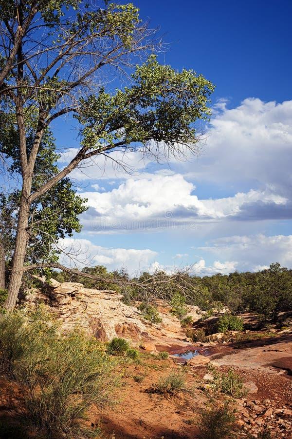 Cedar Mesa in monumento nazionale delle orecchie degli orsi immagini stock libere da diritti