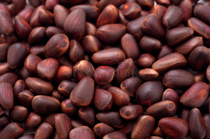 Download Cedar nut stock photo. Image of color, fresh, exotic - 39510126