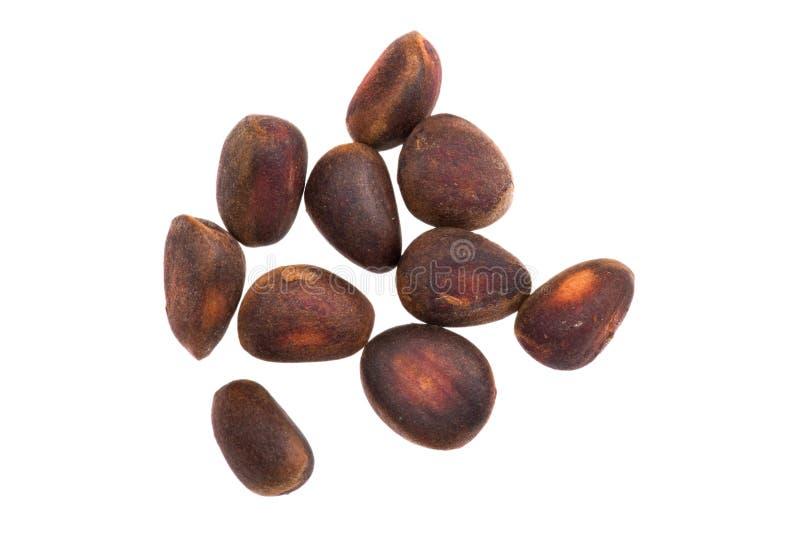 Download Cedar nut on white stock image. Image of brown, cedar - 21863401