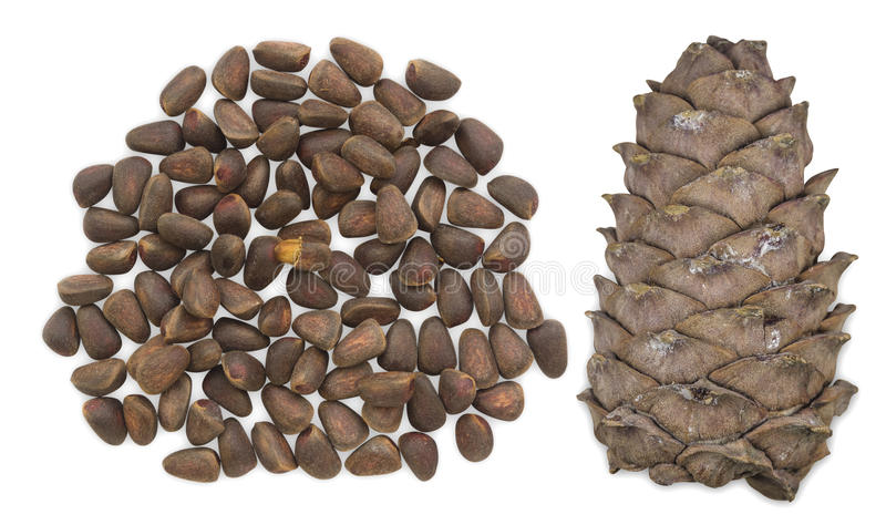 Cedar nuts with cone stock photo