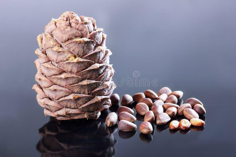 Cedar, nuts stock images