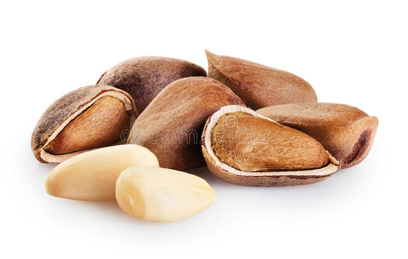Cedar pine nuts  isolated on white background. With clipping path stock photos