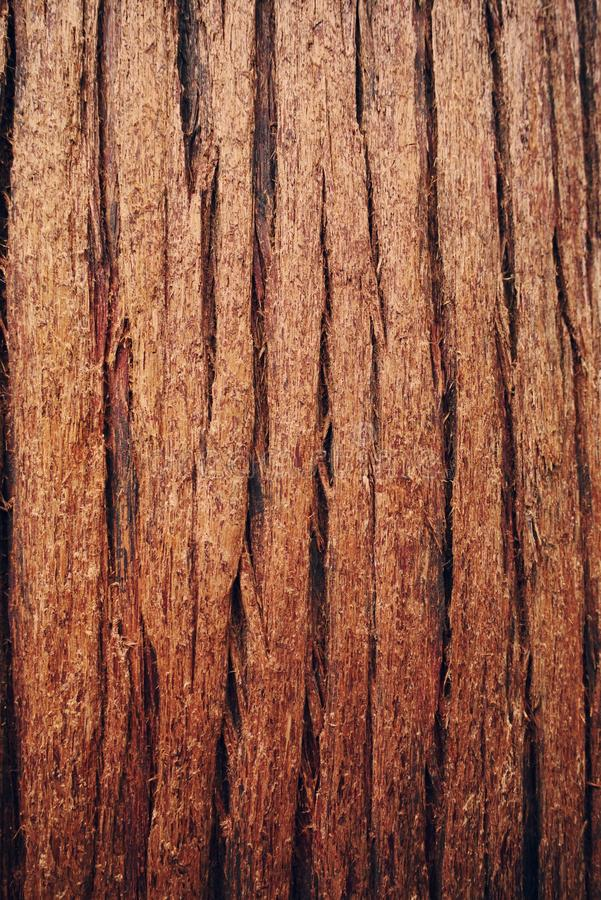 Cedar stock image