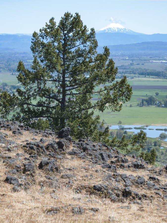 Cedar Tree en MT McLoughlin in Zuidelijk Oregon stock foto's