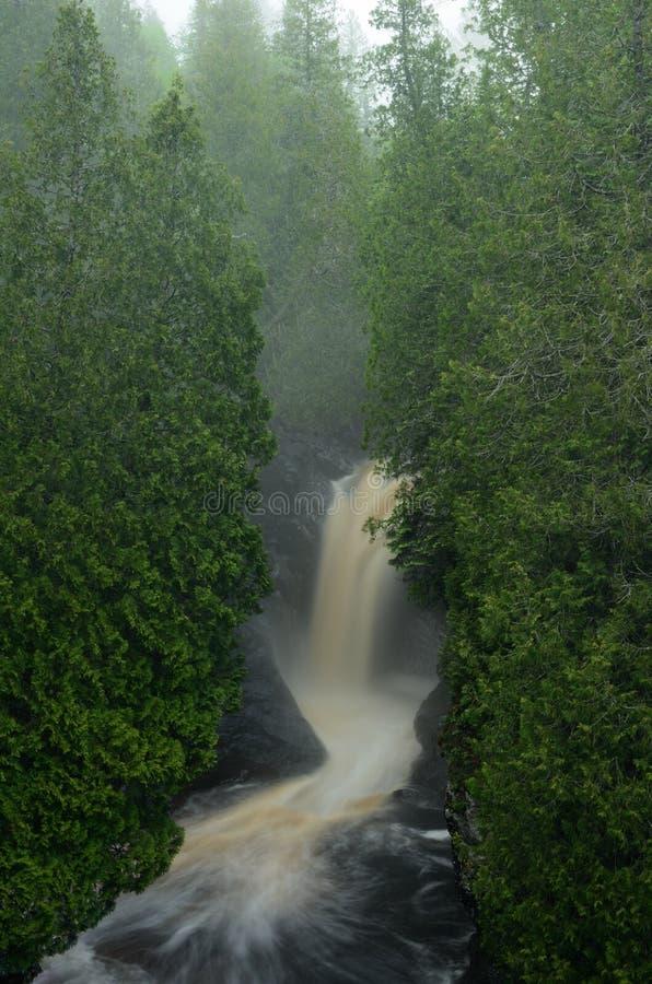 Cedar Trees e cascata fotografia stock