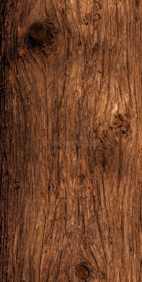 Cedar trunk bark. royalty free stock photography